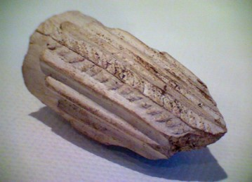 Fig 4. Fragment of mid 19th century clay pipe bowls